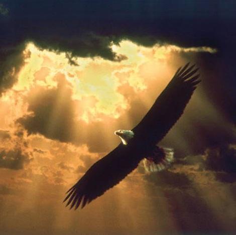 soaring_eagle_150
