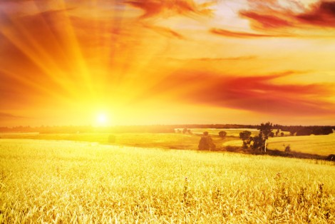 bigstock-wheat-field-at-sunset-24968420
