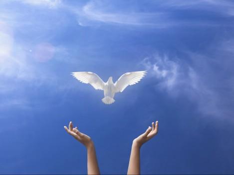 Giornata-mondiale-della-Pace-111-e1451472263775