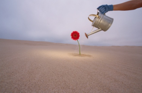 Watering Flower in Desert