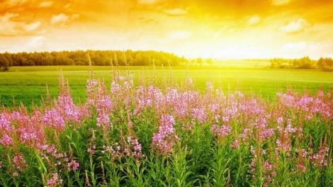 campo-de-flores-en-primavera