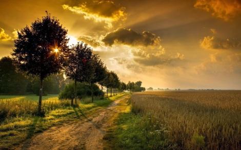 tributo-a-nuestros-paisajes-naturales-autumn-landscape-with-trees-1920x1200-wallpaper