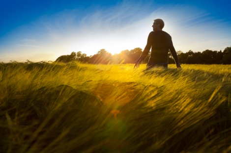 Man standing in a field of barley at sunset.