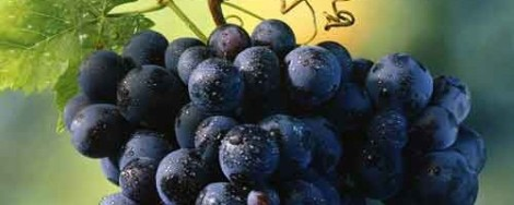 grapes_small-500x200 (1)