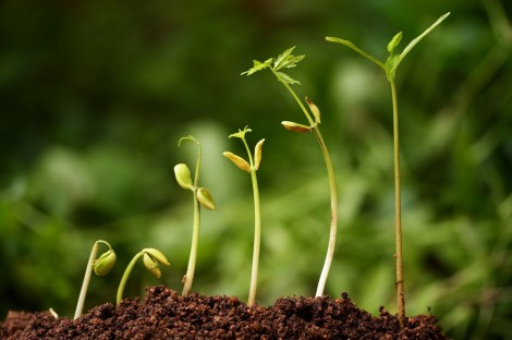 fotolia_9691049_m-sprouting-seeds-e1432942716395
