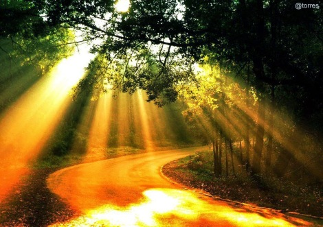 path-trees-sunrays