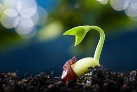 seed death