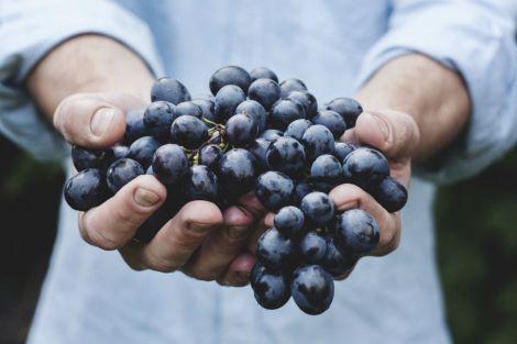 fruto-el-es (1)