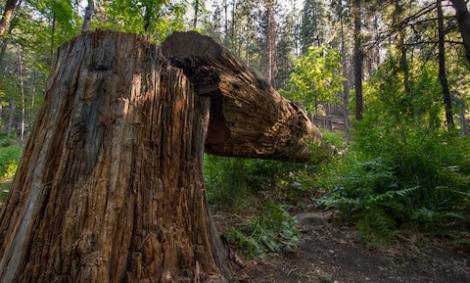 fallen-tree-blog